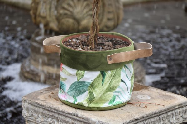 70065254 - Ficus Moclame Platted (3)