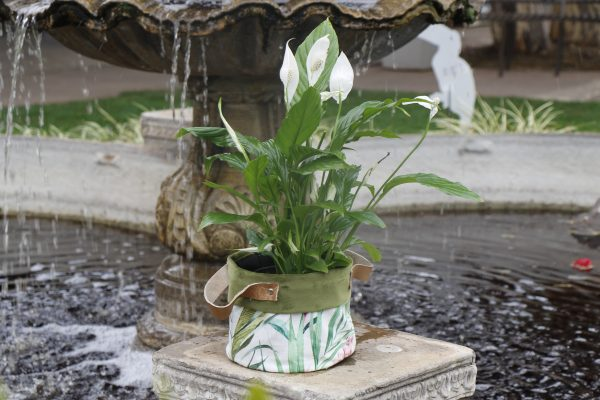 70065256 - Peace Lily (4)