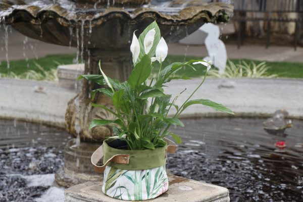 70065256 - Peace Lily