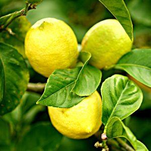 Citrus/lemon/Orange Naarjie/lime