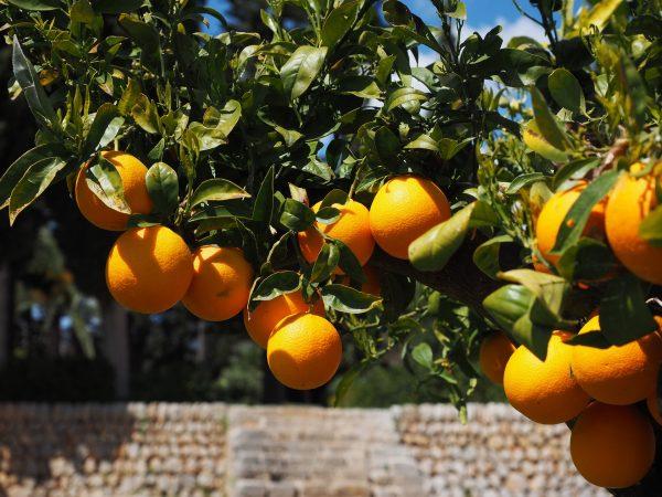 oranges-1117617_1920