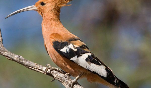 Birdinging.jpg